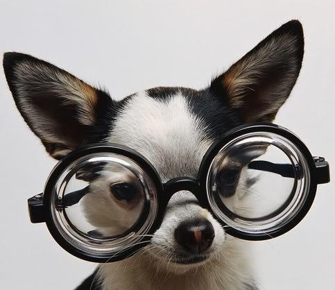 funny-cute-dog-7
